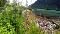 Foxglove and Lupine flowers near the beach of a Fjord in Norway Stock Footage