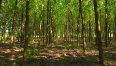 Passing Through Forest Tracking Shot Tree Corridor Summer Nature Background - stock footage