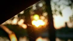 cobwebs in the rays of the evening caressing sun - stock footage