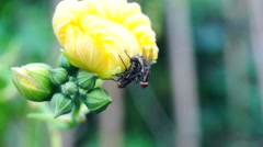 Two flies was lying in a loofah flower on sex. Stock Footage
