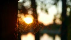 Cobwebs in the rays of the evening caressing sun Stock Footage