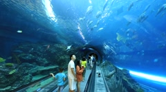 People looking the ocean fish in aquarium tunnel,Far Glory Ocean Park Stock Footage