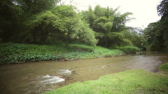 River heavily vegetated bank right to left pan Stock Footage