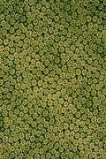 Texture fabric of small floral pattern. - stock photo
