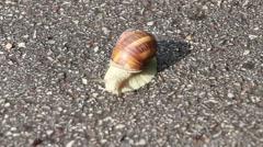 Snail on sunlight Stock Footage