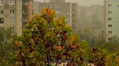 Top Of A Tree On A Rainy And Windy Autumn Day, Late October, City - stock footage