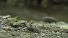 Small butterflies take off from the land of super slow motion Stock Footage