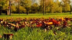 Autumn In Park, Dry Red Leaves Falling, People Walking In Background, Pan - stock footage