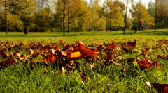 Autumn In Park, Dry Red Leaves Falling, People Walking In Background - stock footage