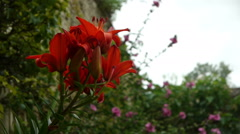 Lily at a botanical garden Stock Footage