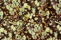 Texture fabric of Small flowers in vintage style for background - stock photo