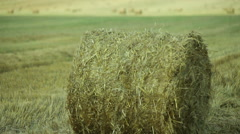 A sheaf of straw on the field Stock Footage
