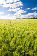 Field of crop Stock Photos