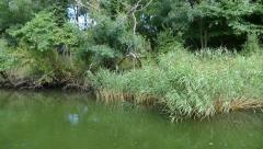 Nature reserve Ropotamo River Bulgaria Stock Footage