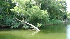Fallen trees Nature reserve Ropotamo River Bulgaria Stock Footage