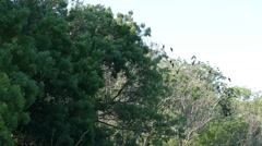 Cormorants perched Stock Footage