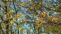 Windy autumn leaves Stock Footage