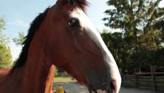 Horse shakes her head on a farm in Close up Stock Footage