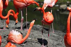 Beautiful pink flamingo. Stock Photos