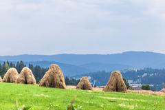 rural landscape, sheaves of hay - stock photo
