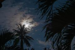 Stock Photo of palm trees in the moonlight