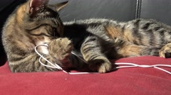 4k tabby kitten biting and eating headphones and wires - stock footage