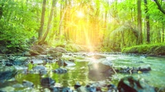 Tropical Forest with River and Lensflares - 4k Stock Footage