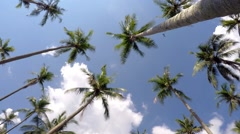 Time Lapse of Coconut Palm Trees against Beautiful Holiday Sky Stock Footage