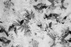 Romantic vintage flower black and white background Stock Photos