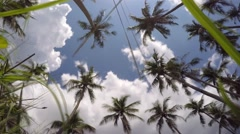 Paradise Coconut Palm Trees on Blue Sky on Luxury Vacation Stock Footage