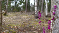 Beautiful purple flowers on the forest - stock footage