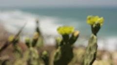 Cactus bloom with yellow flowers on Mediterranean coast, Herzliya Stock Footage