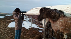 iceland horses travel photo - stock footage