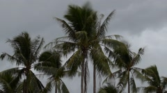 Cloudy Gloomy Evening Sky with Coconut Palm Trees. Time Lapse Arkistovideo