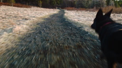 Running with dog Stock Footage