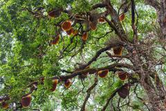 Honey tree Stock Photos
