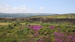 Somerset countryside with pink flowers North Hill near Minehead PAN Stock Footage