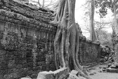 Stock Photo of Tree roots overwhelm ancient temple
