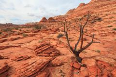 Landscape of Coyote Buttes North wilderness area Stock Photos