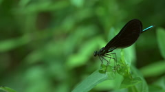Dragonfly flying off of a leaf in slow motion - stock footage