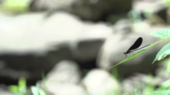 Dragonfly on a Leaf - Justified Right Stock Footage