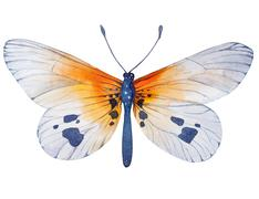 Hand painted watercolor butterfly illustration - stock illustration