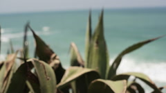 Succulent growing on Mediterranean coast, pan right to sea - stock footage
