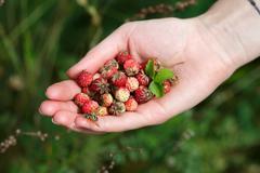 Handful of wildberries - stock photo