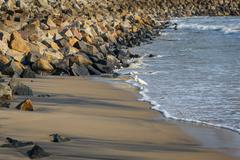 Heron on the shore of the ocean - stock photo