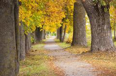 Park. autumn Stock Photos