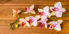 Top down of beautiful blooming twig orchid flower, phalaenopsis on wooden bac Stock Photos