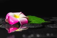 spa concept of green leaf hibiscus, plumeria with drops on zen basalt stones  - stock photo