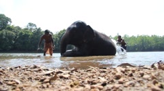 Slider sot of Elephant being cleaned Stock Footage