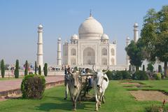 People cut grass at Taj Mahal in Agra, India. Stock Photos
